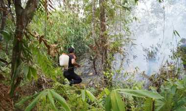 30 Hektare Area Rehabilitasi Orangutan Terbakar