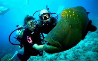 Nadine Chandrawinata Ingatkan Pentingnya Lisensi Diving