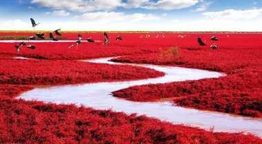 Ada Pantai Merah di Tiongkok
