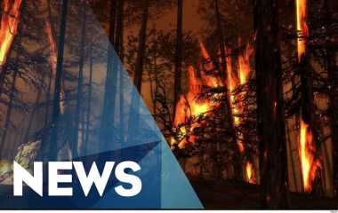 Pemerintah Diminta Tindak Tegas Pembakar Hutan