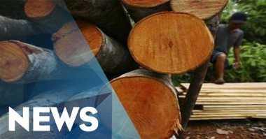 KPK: Pendapatan di Sektor Hutan Tak Optimal