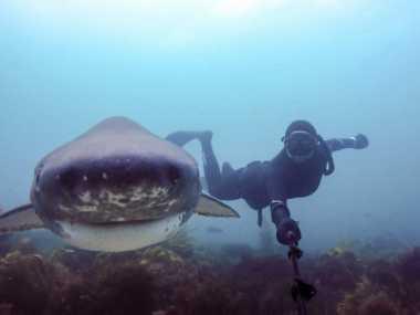 Foto Selfie Menakutkan Bersama Ikan Hiu