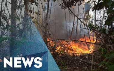 Pemerintah Baru Bekukan Empat Perusahaan Pembakar Hutan