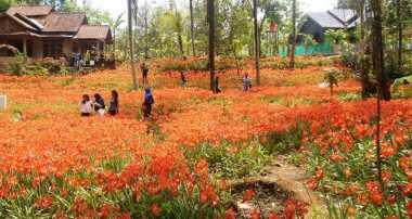Kebun Bunga Hebohkan Nitizen
