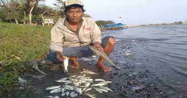 Ribuan Ikan di Ancol Mati