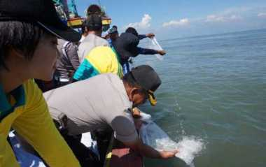32.000 Ikan Ditebar ke Danau Toba