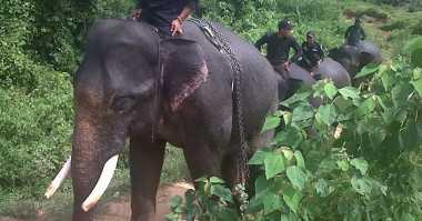 Gajah Masuk Permukiman, Satu Rumah Warga Dirusak