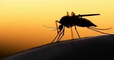 Prancis Batasi Donor Darah Akibat Virus Zika