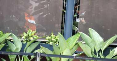 Indonesia Sepekan: Dari Kasus Masinton hingga Rekonstruksi Pembunuhan Mirna