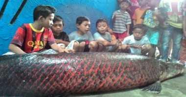 Warga Sleman Sate Ikan Raksasa Sepanjang 3 Meter