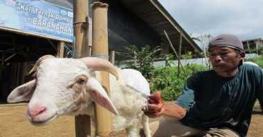 Susu Kambing Berpotensi Gantikan Sapi untuk Aneka Olahan