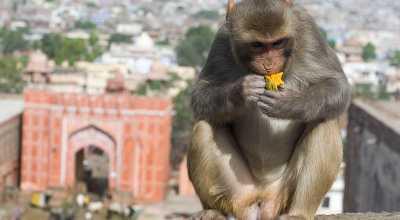 4 Destinasi Kera yang Cocok di Tahun Shio Monyet