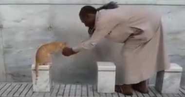 Kisah Jamaah Umroh Beri Minum Kucing dengan Tangannya