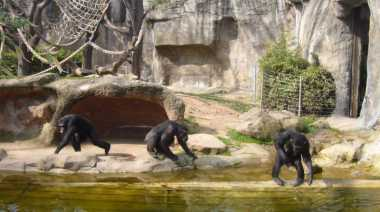 Kebun Binatang Sydney Siapkan Pertunjukan Spektakuler