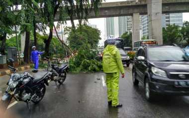 Pohon Tumbang di Jalan Rasuna Said Kuningan