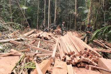 Polisi Hutan Kurang, Illegal Logging Marak di TNGL