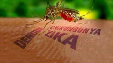 Mirip DBD, Pemerintah Daerah Waspada Virus Zika