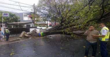 Pohon Tumbang Tutup Jalan di Kuningan