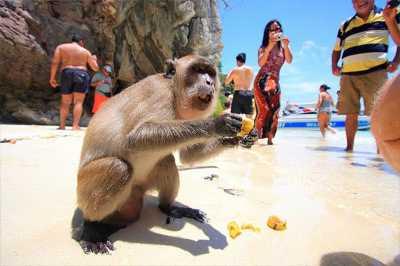 Pulau Monyet Itu Ada di Thailand