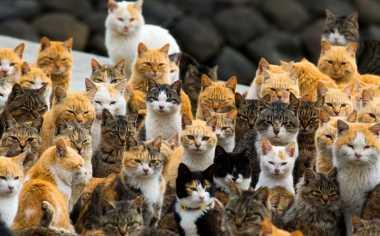 Liburan ke Aoshima Jepang, Pulau Seribu Kucing