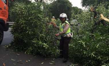 Pohon Tumbang Sebabkan Lalin Halim Arah Cawang Padat