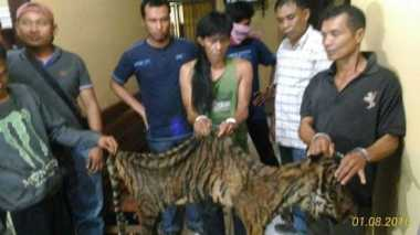 Polisi Tangkap Pemburu Harimau Sumatera