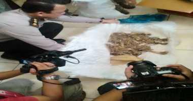 Penampung Harimau Sumatera Terkenal 'Pemain' Lintas Provinsi