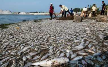 Masyarakat Adat Minta PT Freeport Umumkan Hasil Lab Sampel Ikan yang Mati