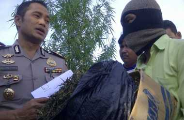 Hasil Penyidikan, Muzakki Peroleh Bibit Ganja dari Aceh