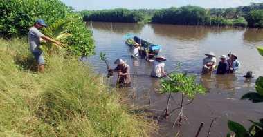 Bertualang di Pesisir Sambil Tanam Mangrove