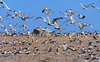 Yuk, Sambangi Pulau Burung Terbesar di Tiongkok saat Long Weekend