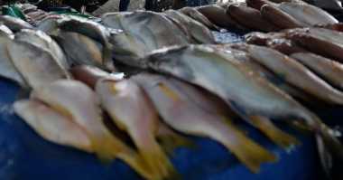PDI Perjuangan Siapkan 1 Ton Ikan Gratis
