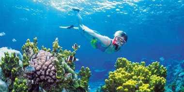 Kementerian Pariwisata Percepat Aturan Wisata Selam di Indonesia