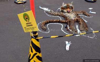 Jual Kulit Harimau Seharga Rp42 Juta, Tiga Pemburu Ditangkap