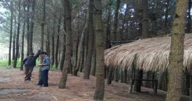 Hutan Pinus Sewu Kumboro, Lokasi Selfie Cetar di Wonogiri