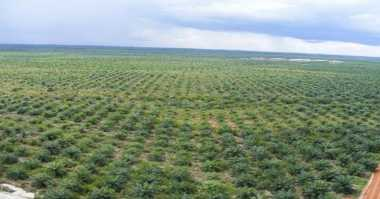 2,3 Juta Ha Lahan Perkebunan di Riau Ilegal