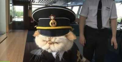Kucing, Kapten Kapal Pesiar di Rusia