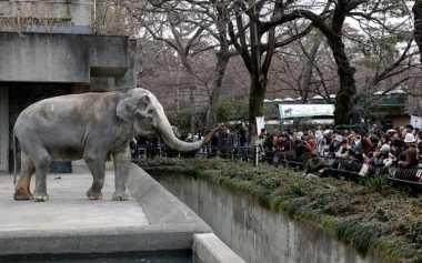 Gajah Paling Kesepian di Dunia Meninggal