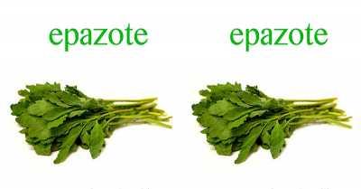 Epazote, Bumbu Khas Rahasia Kelezatan Kuliner Meksiko