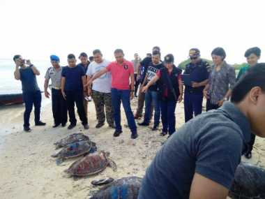 Puluhan Penyu Hasil Selundupan Dilepas di Pulau Menjangan