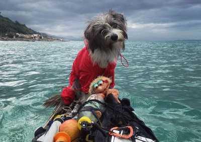 Anjing Ini Berlayar Hingga Laut Mediterania