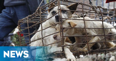 Sehari, 10 Warga Jatiluwih Bali Positif Rabies