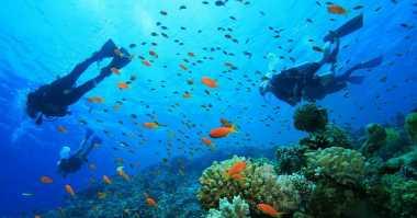 Lindungi Wisata Dolpin dan Snorkeling, Ini Sanksi Perusak Terumbu Karang