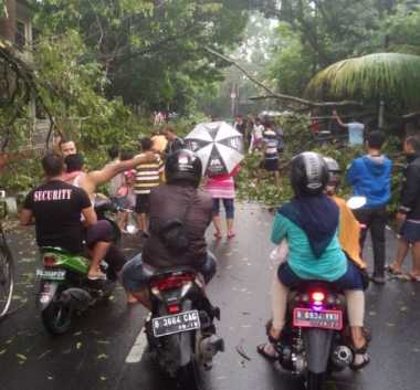 Hujan Deras, Sejumlah Pohon di Jalan Veteran Tangerang Tumbang