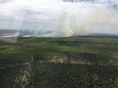 20 Hektare Lahan PT Sawita Terbakar, Helikopter dan Pesawat Dikerahkan