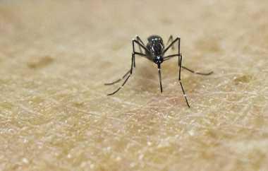 Cara Penyemprotan Nyamuk yang Sebaiknya Dilakukan