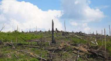 Selama 9 Tahun, 290 Ribu Hektare Hutan Aceh Rusak