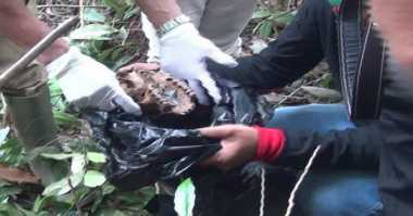Warga Kapuas Heboh Penemuan Tiga Tengkorak Orangutan
