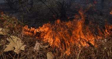 SP3 Perkara 15 Perusahaan Diduga Pembakar Lahan, Polda Riau Didemo