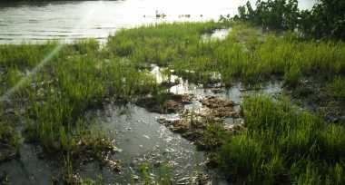Anyer Kebanjiran, Ratusan Hektare Sawah Terancam Gagal Panen